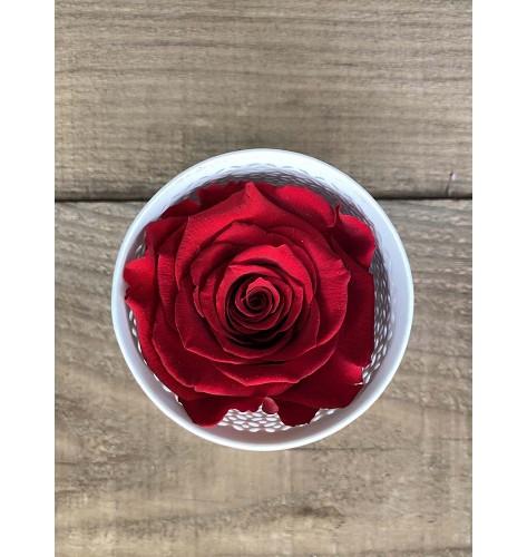 Eternal single rose