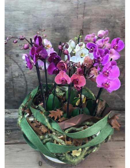Orchid Box - composizione con orchidee phalaenopsis